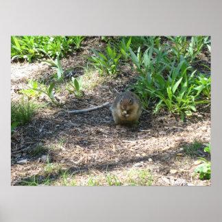 Ground Squirrel 2 Photo Print