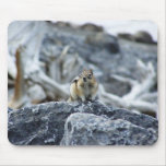 Ground squirrel #3 mouse pad