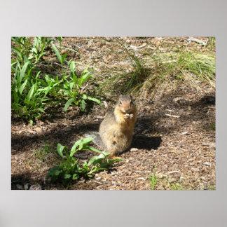 Ground Squirrel 4 Photo Print