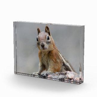 Ground Squirrel Acrylic Award