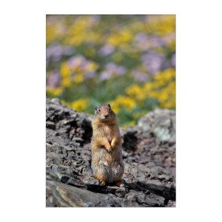 Ground Squirrel Alert for Danger Acrylic Wall Art