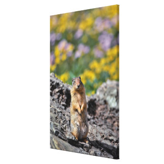 Ground Squirrel Alert for Danger Canvas Print