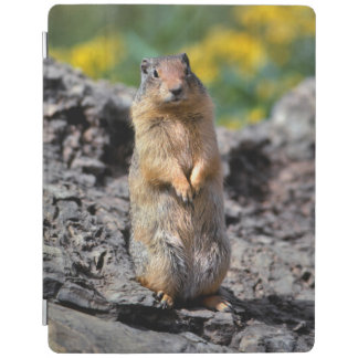 Ground Squirrel Alert for Danger iPad Smart Cover
