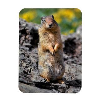 Ground Squirrel Alert for Danger Magnet