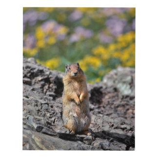 Ground Squirrel Alert for Danger Panel Wall Art