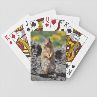 Ground Squirrel Alert for Danger Playing Cards