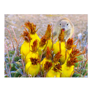 Ground Squirrel and Barrel Cactus Postcard