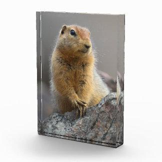 Ground Squirrel Award