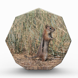 Ground Squirrel Award