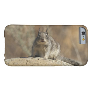 Ground Squirrel Barely There iPhone 6 Case