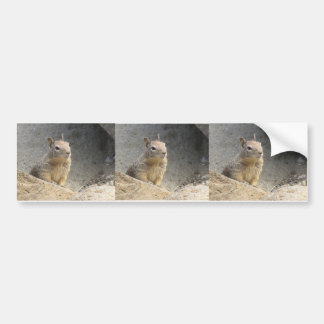 Ground Squirrel Bumper Sticker