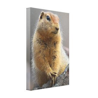 Ground Squirrel Canvas Print