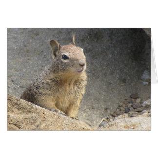 Ground Squirrel Cards