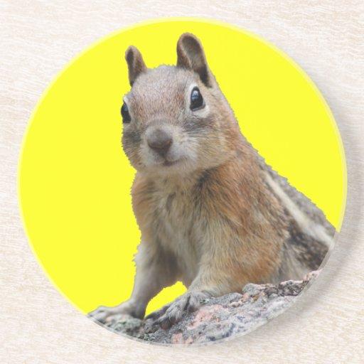 ground squirrel drink coaster