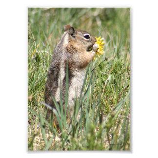 Ground Squirrel Eating Flower Photo Art