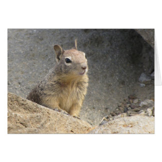 Ground Squirrel Greeting Cards