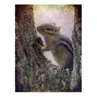 Ground Squirrel Grunge Postcard