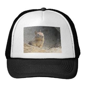 Ground Squirrel Hat