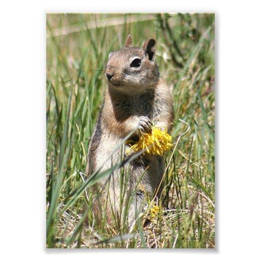 Ground Squirrel Holding Flower Photo Print