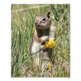 Ground Squirrel Holding Flower Art Photo