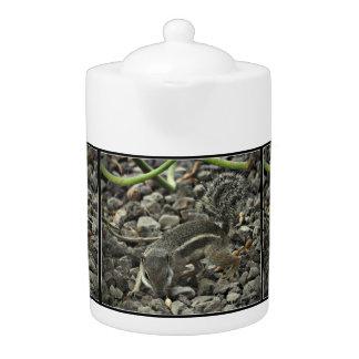 Ground Squirrel In Black & White Tea Pot