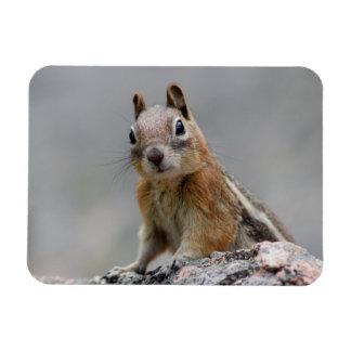 Ground Squirrel Magnet