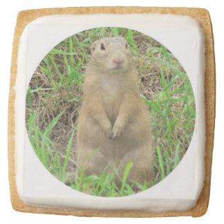 ground squirrel square premium shortbread cookie