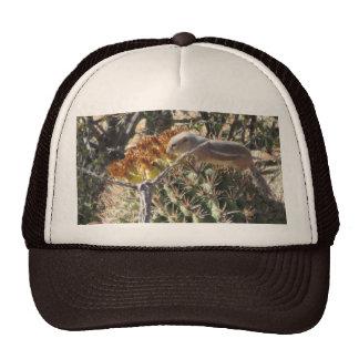 Ground Squirrel on Barrel Cactus Hat