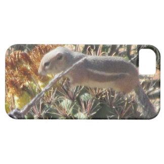 Ground Squirrel on Barrel Cactus iPhone 5 Case