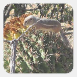 Ground Squirrel on Barrel Cactus Square Stickers