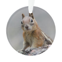 Ground Squirrel Ornament