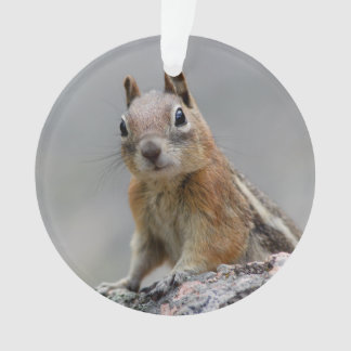 Ground Squirrel Ornament