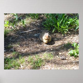 Ground Squirrel photo1 Print