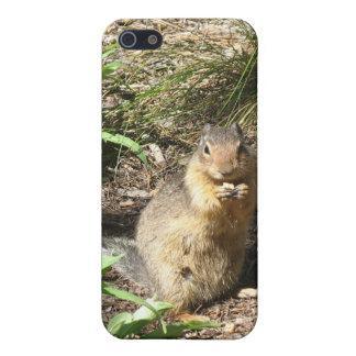 Ground Squirrel Photo 3 Speck Case