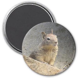 Ground Squirrel Refrigerator Magnet