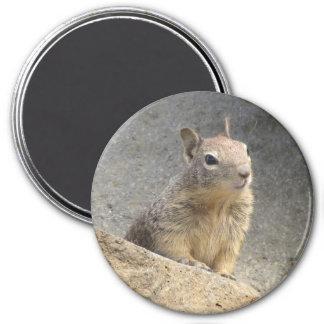 Ground Squirrel Refrigerator Magnets