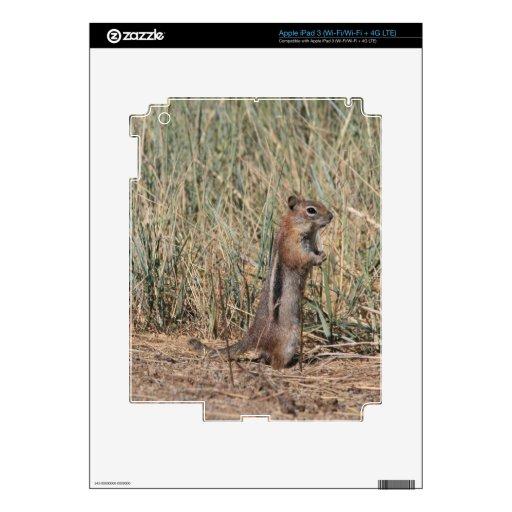 Ground Squirrel Decals For iPad 3