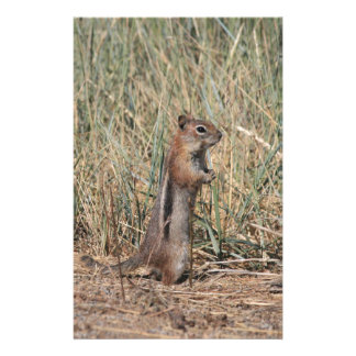 Ground Squirrel Stationery