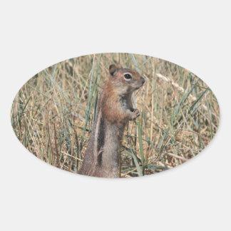 Ground Squirrel Oval Stickers