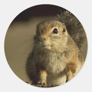 Ground Squirrel Round Sticker
