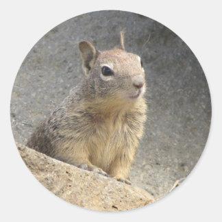 Ground Squirrel Stickers
