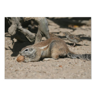 Ground squirrel with walnut card