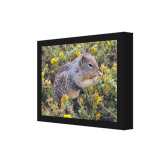 Ground Squirrel Wrapped canvas Print