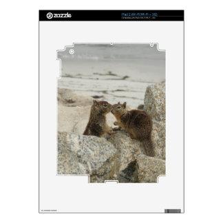 Ground Squirrels in Love iPad 2 Decals