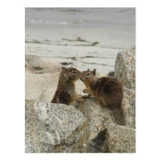 Ground Squirrels in Love Postcard