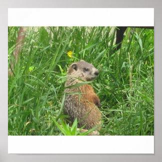 Groundhog alertado póster