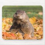 Groundhog Alfombrilla De Ratones
