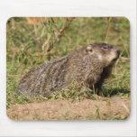 Groundhog Alfombrillas De Ratones