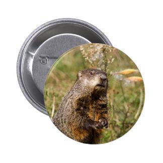 Groundhog Button