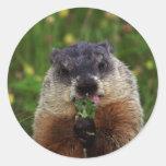 Groundhog con las flores pegatina redonda